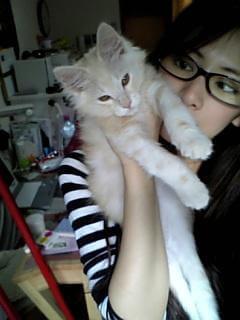 子猫を抱く北川景子