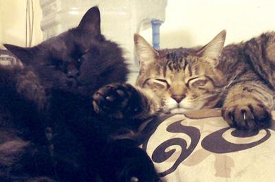 家でリラックスする猫