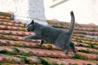 屋根を歩くシャルトリュー