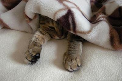 布団の中から出てこない猫