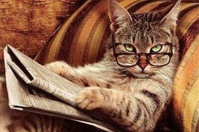 新聞を読む知的な猫