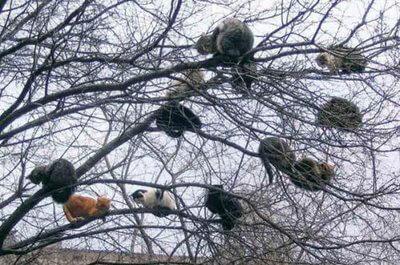 木の枝に座るたくさんの猫