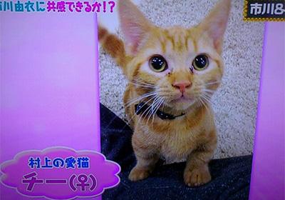 村上信五の飼い猫のマンチカン
