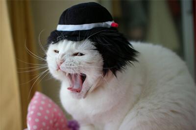 松田優作の真似をする猫