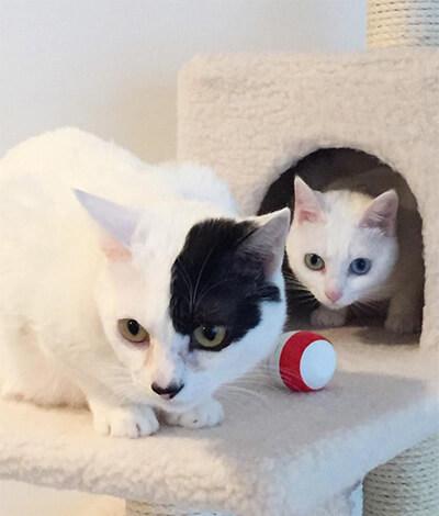 柴咲コウの飼い猫の「るな」と「のえる」
