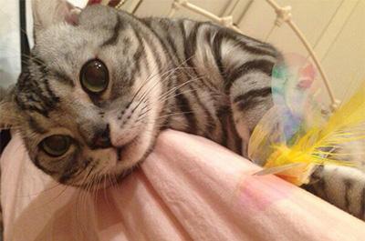横山由依の飼い猫ビス
