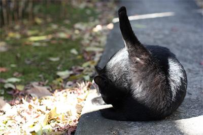 毛づくろいをする野良猫