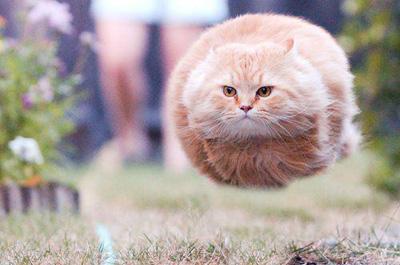 毛玉の様な猫