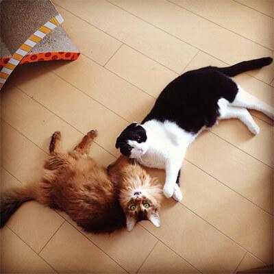 水原希子の飼い猫のチッチョとブブ