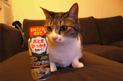 爪とぎ防止スプレーを見つめる猫