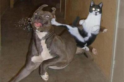 犬と喧嘩をする猫