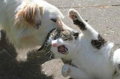 犬に連れて行かれる猫