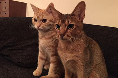 猫のエルドレッドとミコライオ
