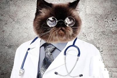 猫のドクター