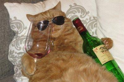 環境に適応する猫