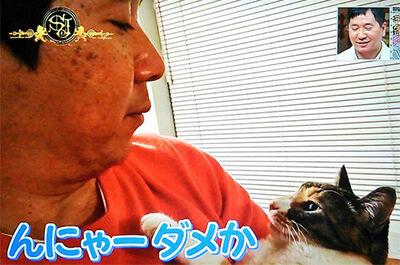 田中裕二と飼い猫のねねちゃん