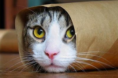 筒の中に入った猫