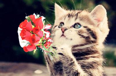 花束を渡す子猫