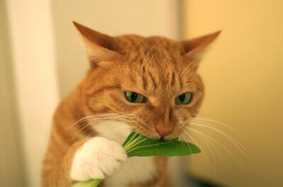 葉を食べる猫