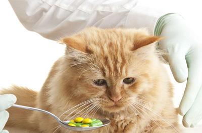 薬を嫌がる猫