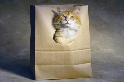 袋に入ったキムリック