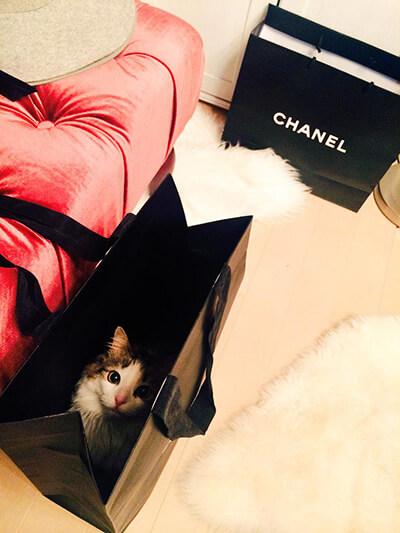 袋に入るダレノガレ明美の猫