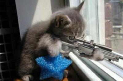 警戒する子猫