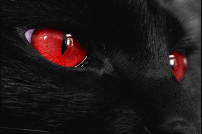 赤い瞳の猫