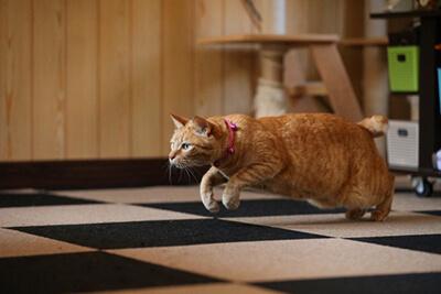 走り出す猫