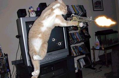 銃を撃つ猫