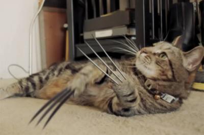 鋭い爪をもつ猫