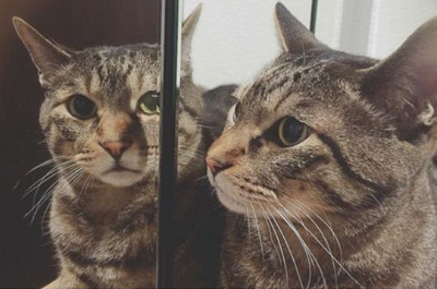 鏡に映るトラジ