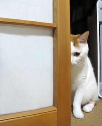 陰からこちらをのぞく猫