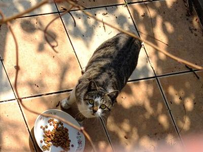 食事中の野良猫