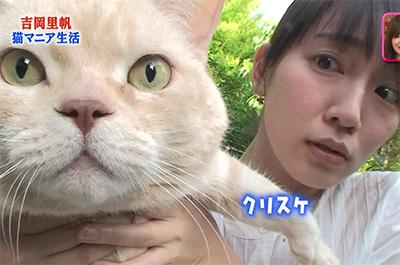 飼い猫を持ち上げる吉岡里帆