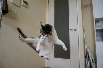 驚いてジャンプする猫