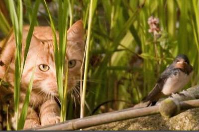 鳥を狙う野良猫