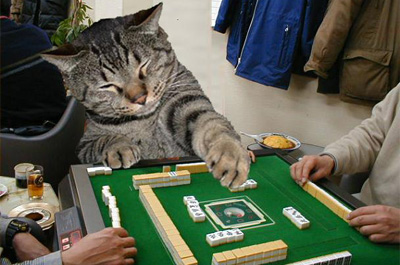 麻雀を楽しむ猫