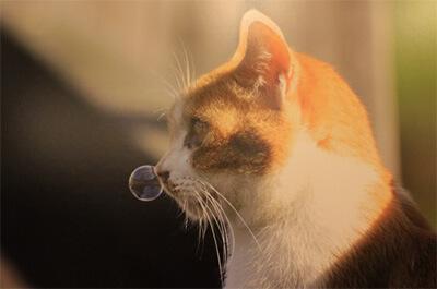 鼻提灯を作っている猫