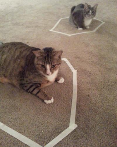 いびつな形の猫転送装置