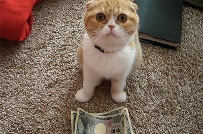 お金の前に座る猫