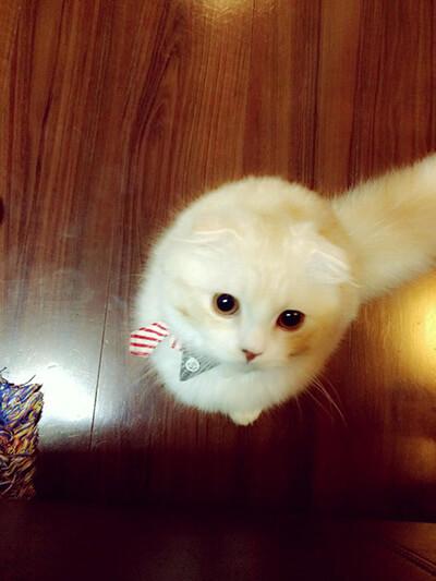 くみっきーの飼い猫ロワ