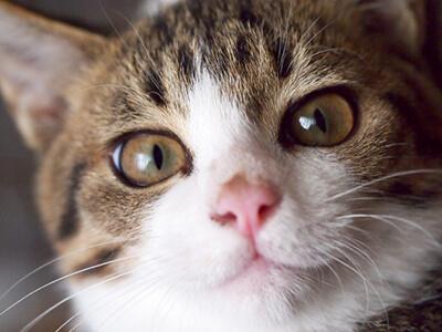 こちらを見つめる飼い猫