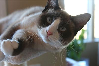 じゃれる猫のスノーシュー