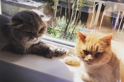 つるの剛士の飼猫の茶子と夢子
