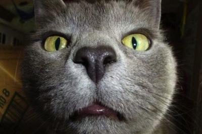 アップで写真に写る猫
