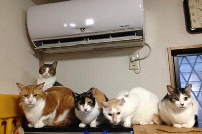 エアコンに群がる猫