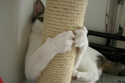キャットタワーの陰から見つめる猫