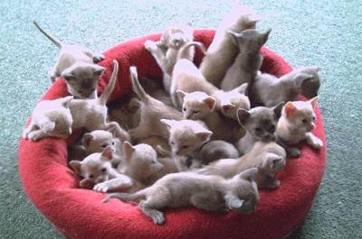 クッションに群がる子猫