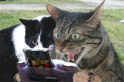 ゲームに夢中になる猫